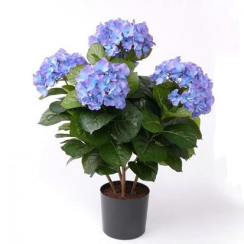 Заболевания комнатных растений